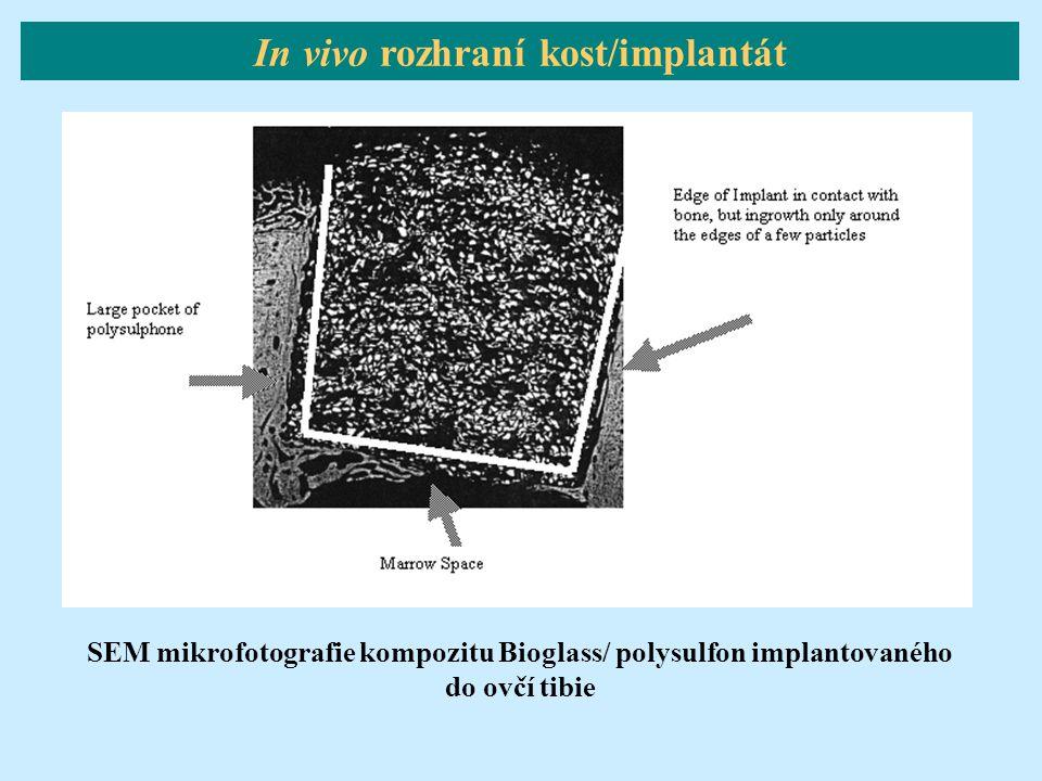 SEM mikrofotografie kompozitu Bioglass/ polysulfon implantovaného do ovčí tibie In vivo rozhraní kost/implantát