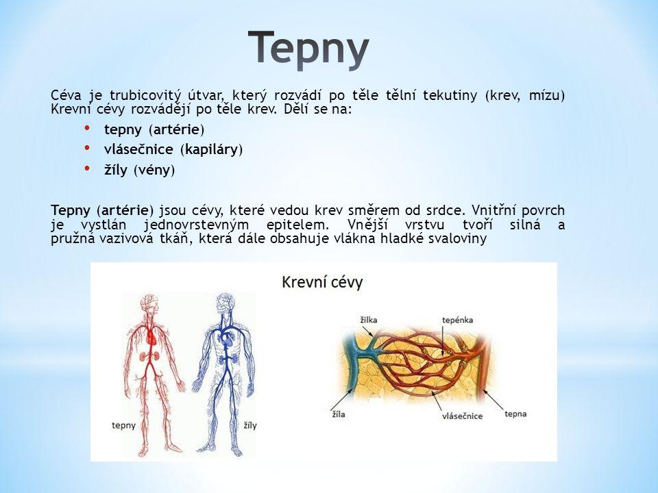 Céva je trubicovitý útvar, který rozvádí po těle tělní tekutiny (krev, mízu) Krevní cévy rozvádějí po těle krev. Dělí se na: tepny (artérie) vlásečnic