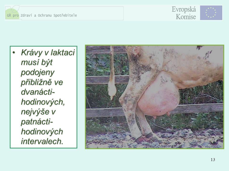 13 Krávy v laktaci musí být podojeny přibližně ve dvanácti- hodinových, nejvýše v patnácti- hodinových intervalech.Krávy v laktaci musí být podojeny p