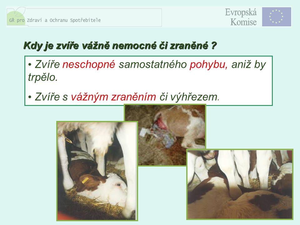 8 Zvíře neschopné samostatného pohybu, aniž by trpělo. Zvíře s vážným zraněním či výhřezem. Kdy je zvíře vážně nemocné či zraněné ?