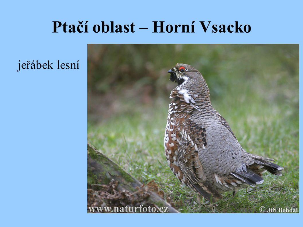 Ptačí oblast – Horní Vsacko jeřábek lesní