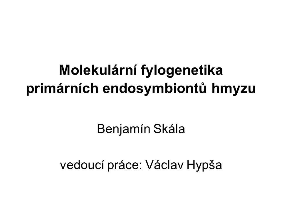 Molekulární fylogenetika primárních endosymbiontů hmyzu Benjamín Skála vedoucí práce: Václav Hypša