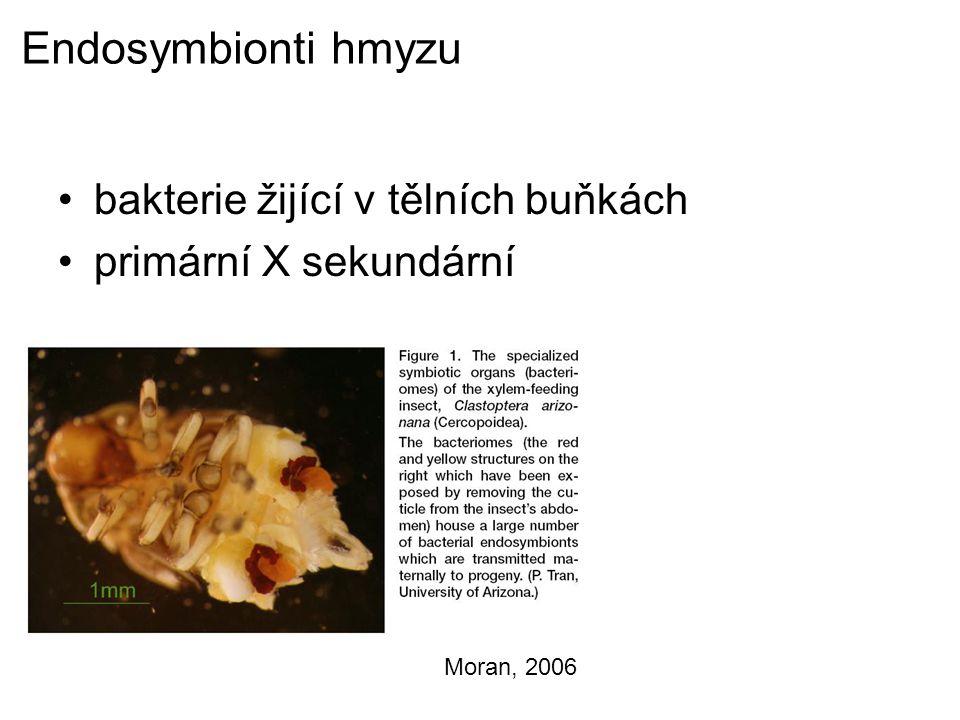 Endosymbionti hmyzu bakterie žijící v tělních buňkách primární X sekundární Moran, 2006