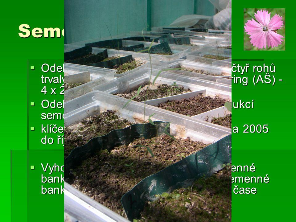Semenná banka  Odebíráno 100 cm 3, vně každého ze čtyř rohů trvalých ploch založených pro monitoring (AŠ) - 4 x 24 vzorků  Odebráno před pastvou a n