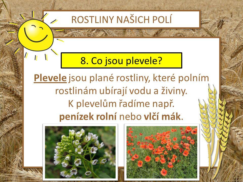 obilí http://pixabay.com/cs/%C5%A1pice-%C5%BEito-obilovin-obil%C3%AD-pole-8759/ Slunce http://pixabay.com/cs/%C5%A1%C5%A5astn%C3%BD-slunce-paprsky-shine-%C3%BAsm%C4%9Bv-47083/ Žito + pšenice http://herbar.divokakosmetika.cz/herbar.php?bylina=256 Slunečnice http://pixabay.com/cs/kv%C4%9Btiny-%C5%BElut%C3%A1-slune%C4%8Dnice-l%C3%A9to-19465/ Řepka olejka http://botany.cz/cs/brassica-napus/ Jetel luční http://cs.wikipedia.org/wiki/Soubor:Trifolium_pratense_0522.jpg Vojtěška setá http://herbar.webnode.cz/tolice-seta/ Len setý http://jindrichohradecky.denik.cz/podnikani/tradicni-len-na-polich-vysociny-prakticky20100505.html Penízek rolní http://www.e-herbar.net/main.php?g2_view=core.DownloadItem&g2_itemId=19390&g2_serialNumber=2 Vlčí mák http://blog.idnes.cz/blog/14045/194944/Vlci_mak.jpg Hrách http://office.microsoft.com/cs-cz/images/results.aspx?qu=hr%C3%A1ch&ex=1#ai:MC900215510| Použité zdroje ZPĚT