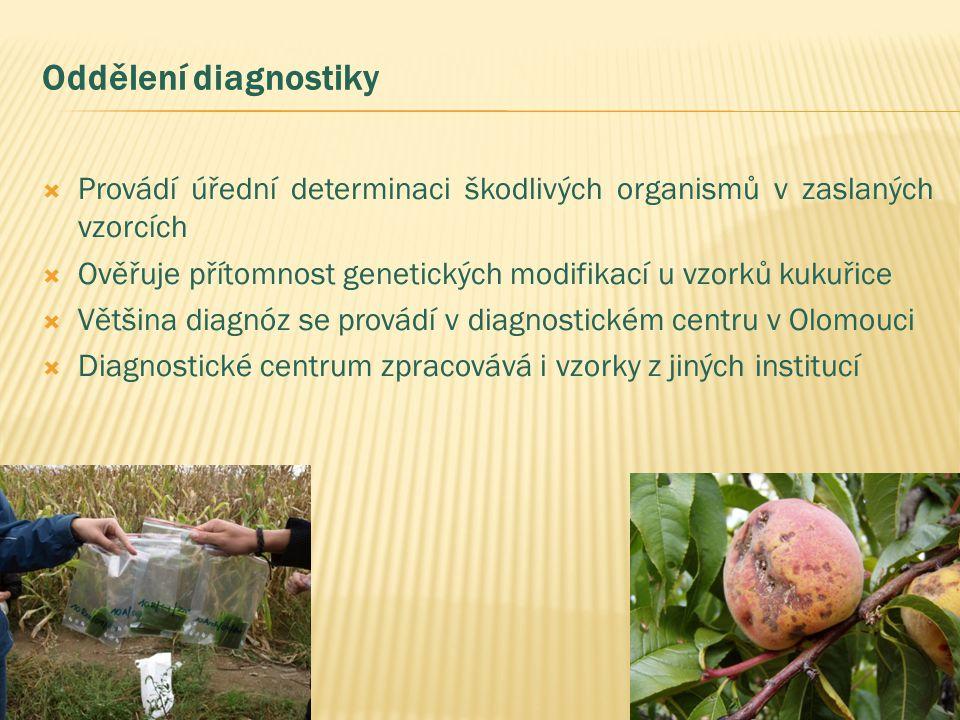 Oddělení diagnostiky  Provádí úřední determinaci škodlivých organismů v zaslaných vzorcích  Ověřuje přítomnost genetických modifikací u vzorků kukuřice  Většina diagnóz se provádí v diagnostickém centru v Olomouci  Diagnostické centrum zpracovává i vzorky z jiných institucí