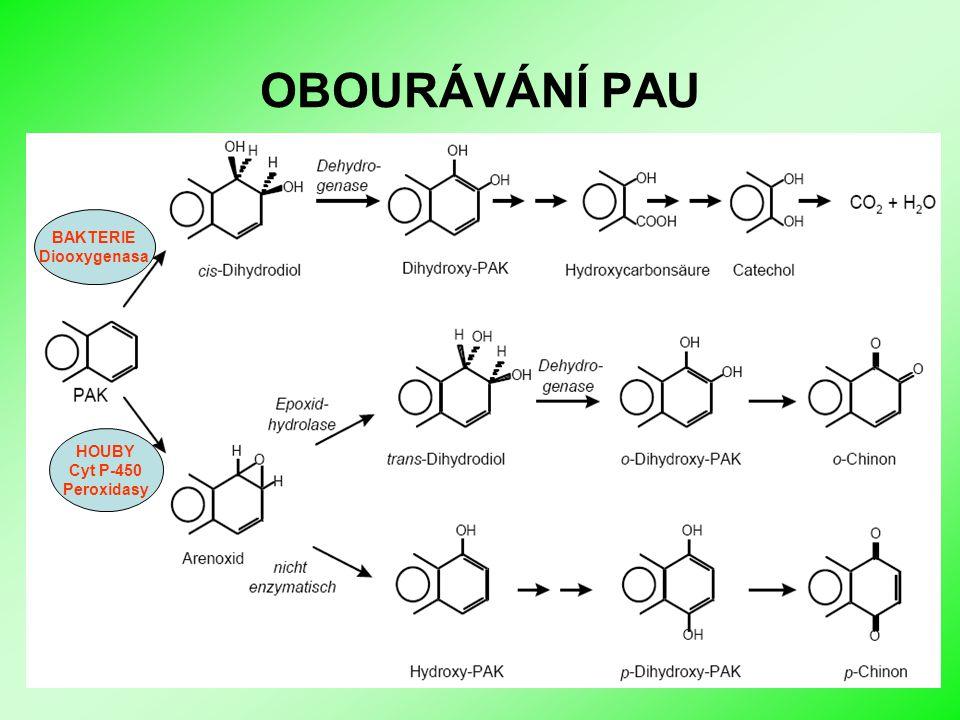 Biologické sanační metody I OBOURÁVÁNÍ PAU HOUBY Cyt P-450 Peroxidasy BAKTERIE Diooxygenasa