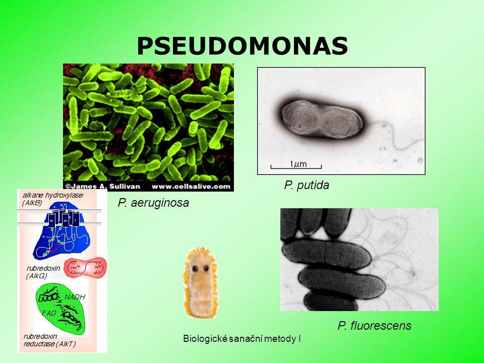 Biologické sanační metody I PSEUDOMONAS P. aeruginosa P. putida P. fluorescens