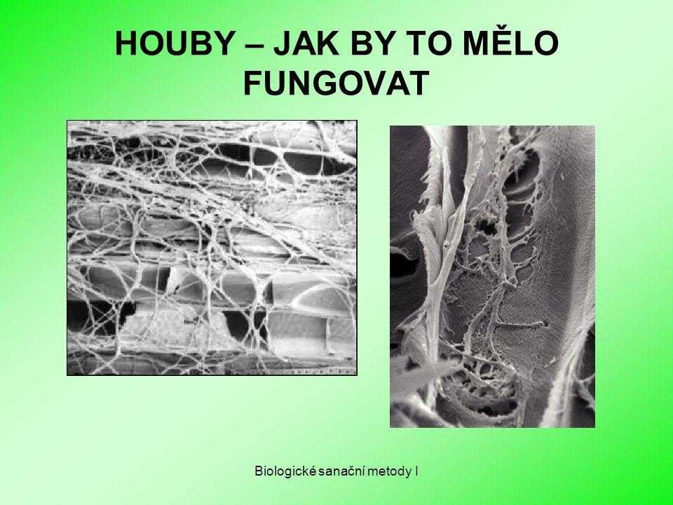 Biologické sanační metody I HOUBY – JAK BY TO MĚLO FUNGOVAT