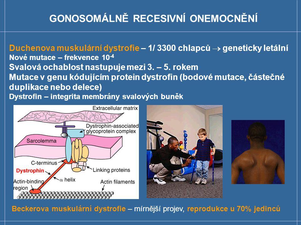 GR – genealogie (X-vázané onemocnění)  Není přenos z otce na syna.  Muži jsou postiženi častěji než ženy  Hemofilie A – 1/ 10 000 postižených mužů