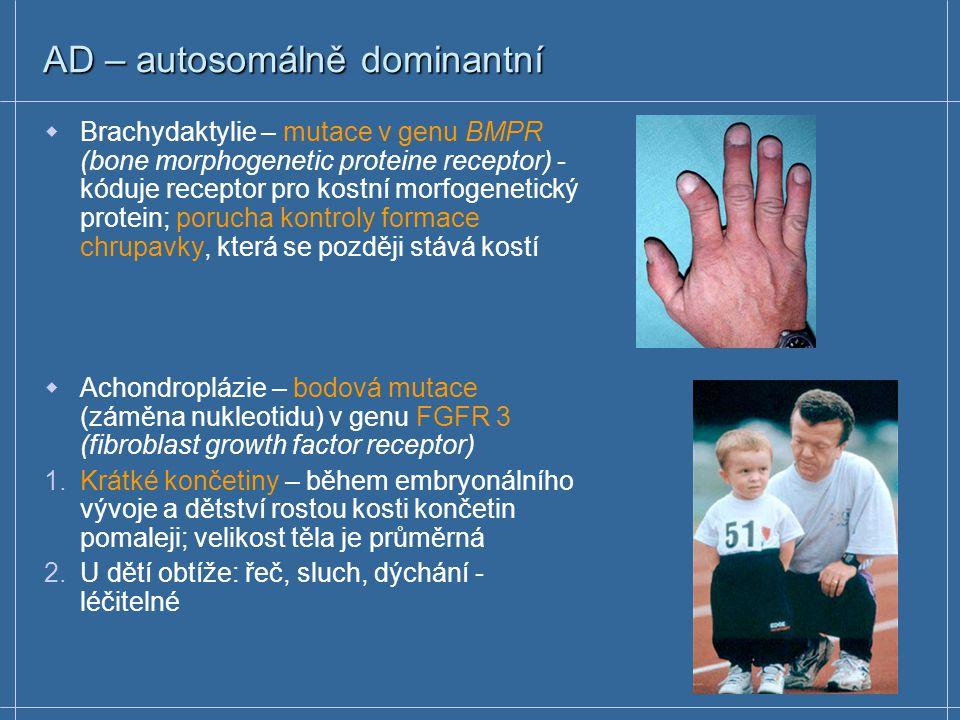 AD – autosomálně dominantní  Každý nemocný jedinec má nemocného jednoho z rodičů (kromě de novo mutací)  Muži i ženy mají stejné riziko získat mutovanou alelu  Riziko výskytu onemocnění pro každého potomka nemocného rodiče je 50%  Pouze jedna mutovaná alela stačí k projevu onemocnění  Zdraví potomci nemocného rodiče nepředávají znak svým potomkům AD onemocněním: brachydaktylie, achondroplázie, polycystická choroba ledvin, hypercholesterolemie, Huntingtonova chorea, neurofibromatóza …