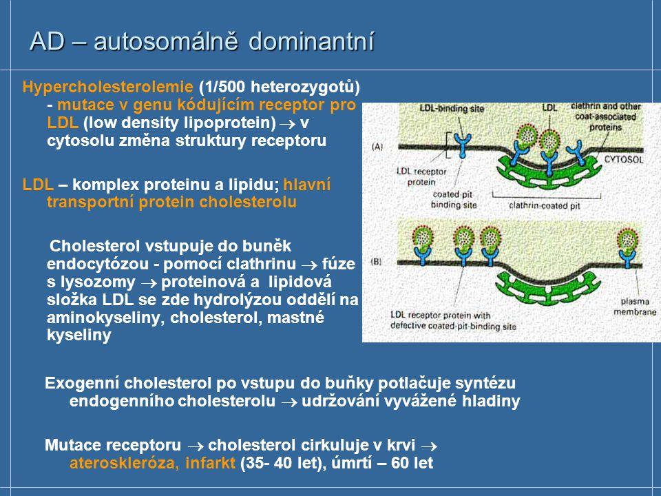 AD – autosomálně dominantní Hypercholesterolemie (1/500 heterozygotů) - mutace v genu kódujícím receptor pro LDL (low density lipoprotein)  v cytosolu změna struktury receptoru LDL – komplex proteinu a lipidu; hlavní transportní protein cholesterolu Cholesterol vstupuje do buněk endocytózou - pomocí clathrinu  fúze s lysozomy  proteinová a lipidová složka LDL se zde hydrolýzou oddělí na aminokyseliny, cholesterol, mastné kyseliny Exogenní cholesterol po vstupu do buňky potlačuje syntézu endogenního cholesterolu  udržování vyvážené hladiny Mutace receptoru  cholesterol cirkuluje v krvi  ateroskleróza, infarkt (35- 40 let), úmrtí – 60 let