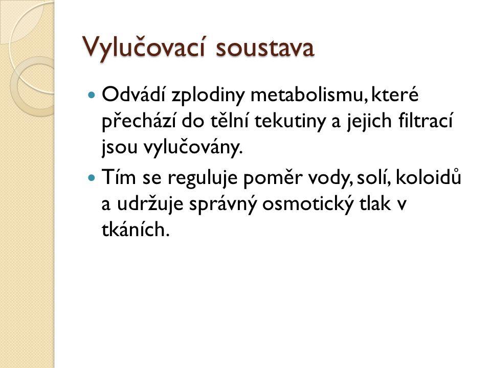 Vylučovací soustava Odvádí zplodiny metabolismu, které přechází do tělní tekutiny a jejich filtrací jsou vylučovány.