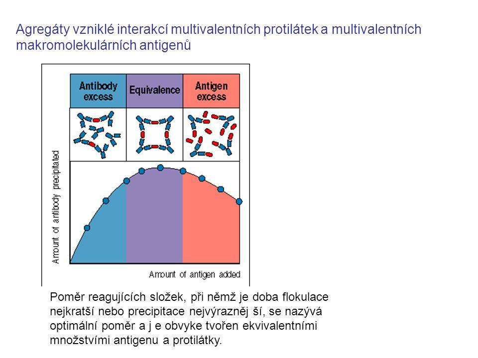 Precipitation reaction Agregáty vzniklé interakcí multivalentních protilátek a multivalentních makromolekulárních antigenů Poměr reagujících složek, p