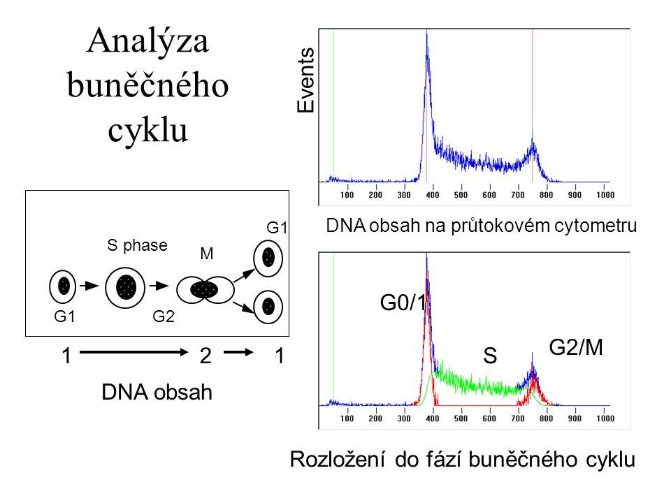 G1 S phase G2 M G1 12 1 DNA obsah DNA obsah na průtokovém cytometru Rozložení do fází buněčného cyklu G0/1 G2/M S Events Analýza buněčného cyklu