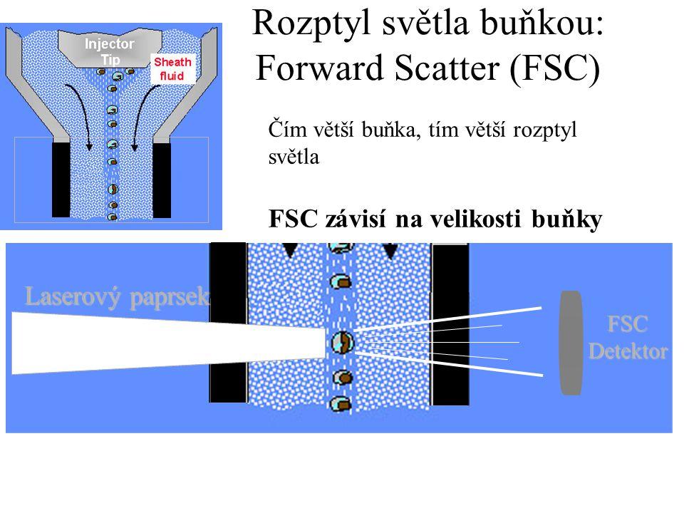 Rozptyl světla buňkou: Side Scatter (SSC) FSC Detektor Sběrné čočky SSC Detektor Laserový paprsek Intenzita SSC je proporcionální množství cytosolických struktur v buňce (granula, buněčné inkluze, atd.) SSC závisí na granularitě buňky