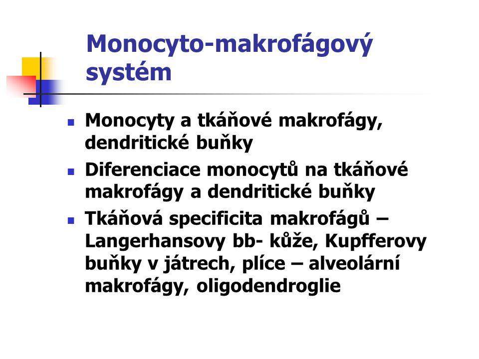 Monocyto-makrofágový systém Monocyty a tkáňové makrofágy, dendritické buňky Diferenciace monocytů na tkáňové makrofágy a dendritické buňky Tkáňová spe