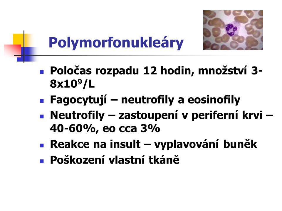 Polymorfonukleáry Poločas rozpadu 12 hodin, množství 3- 8x10 9 /L Fagocytují – neutrofily a eosinofily Neutrofily – zastoupení v periferní krvi – 40-6