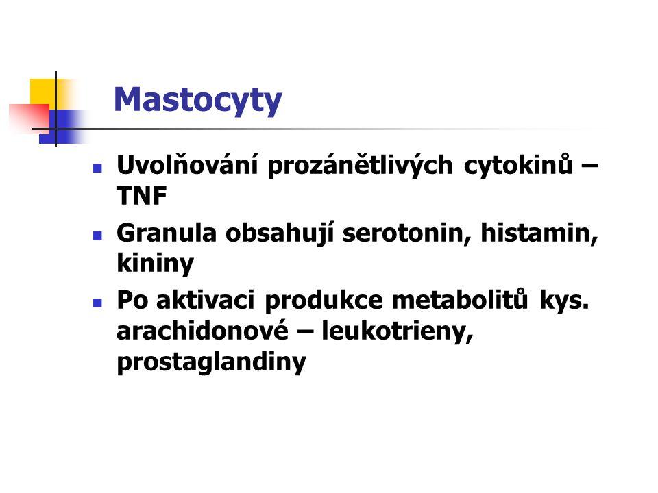 Mastocyty Uvolňování prozánětlivých cytokinů – TNF Granula obsahují serotonin, histamin, kininy Po aktivaci produkce metabolitů kys. arachidonové – le