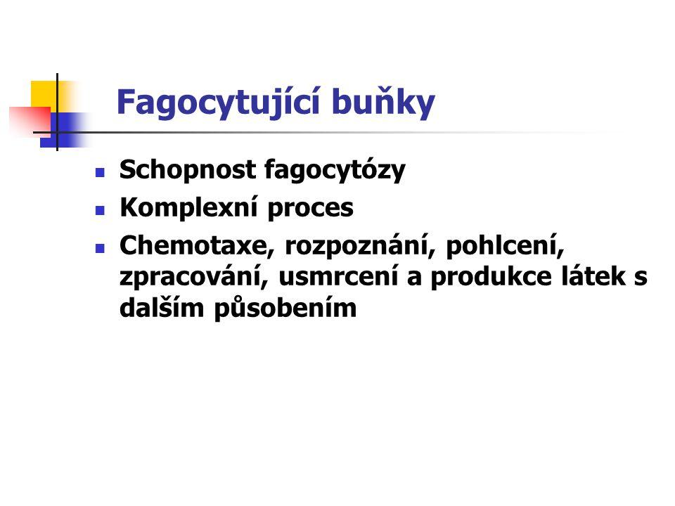 Schopnost fagocytózy Komplexní proces Chemotaxe, rozpoznání, pohlcení, zpracování, usmrcení a produkce látek s dalším působením