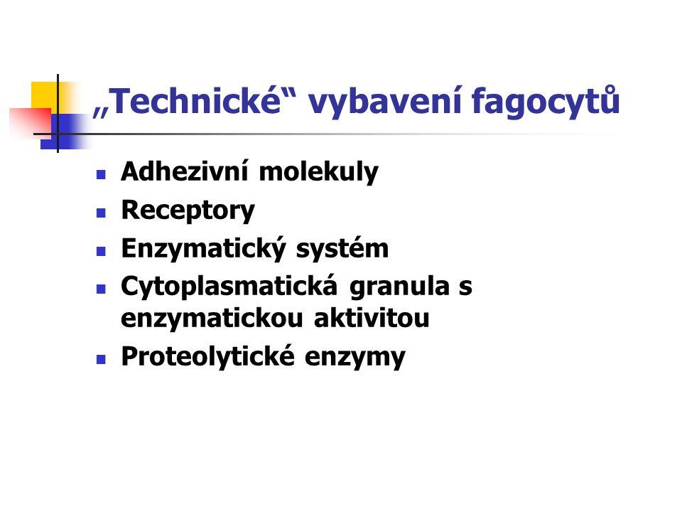 """"""" Technické"""" vybavení fagocytů Adhezivní molekuly Receptory Enzymatický systém Cytoplasmatická granula s enzymatickou aktivitou Proteolytické enzymy"""
