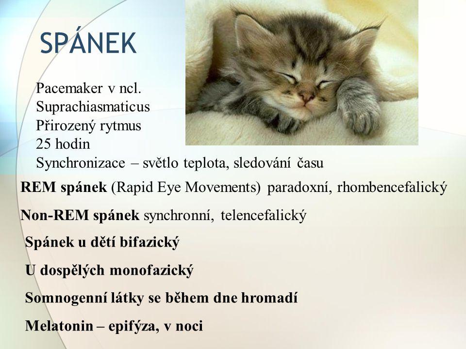 SPÁNEK REM spánek (Rapid Eye Movements) paradoxní, rhombencefalický Non-REM spánek synchronní, telencefalický Spánek u dětí bifazický U dospělých mono