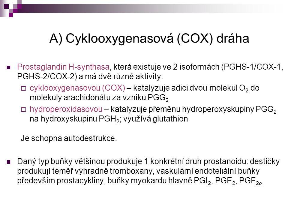 A) Cyklooxygenasová (COX) dráha Prostaglandin H-synthasa, která existuje ve 2 isoformách (PGHS-1/COX-1, PGHS-2/COX-2) a má dvě různé aktivity:  cyklo