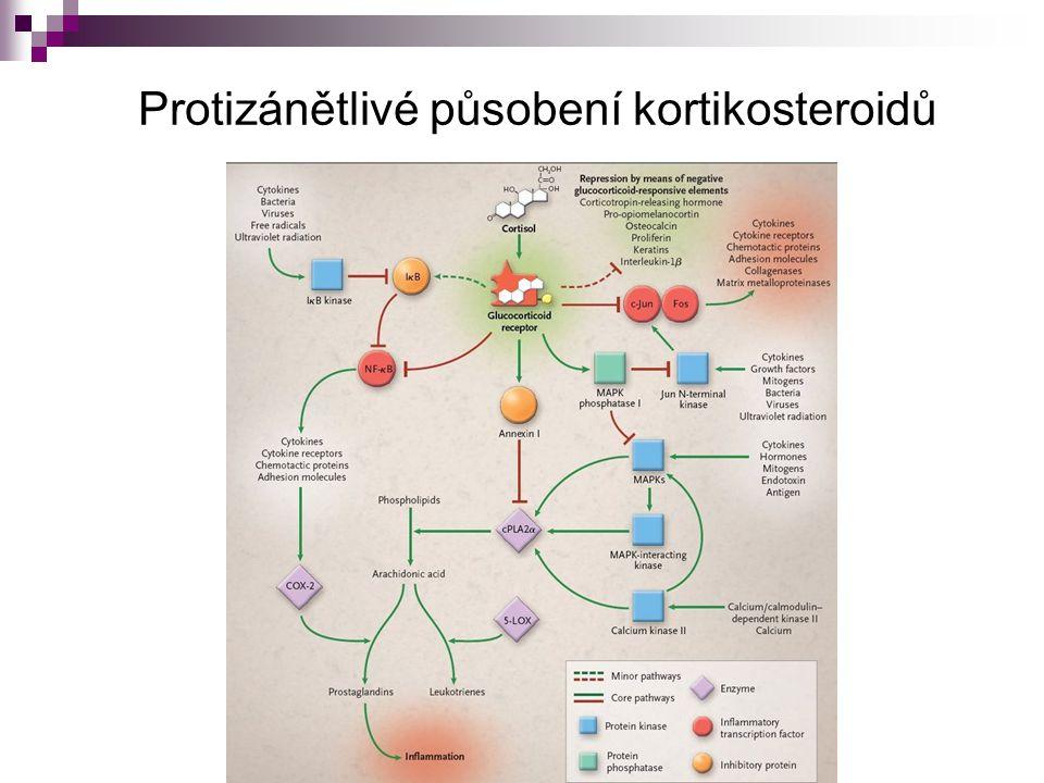 Protizánětlivé působení kortikosteroidů