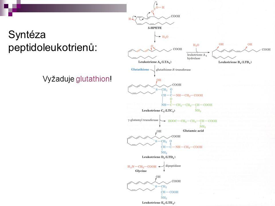 Syntéza peptidoleukotrienů: Vyžaduje glutathion!