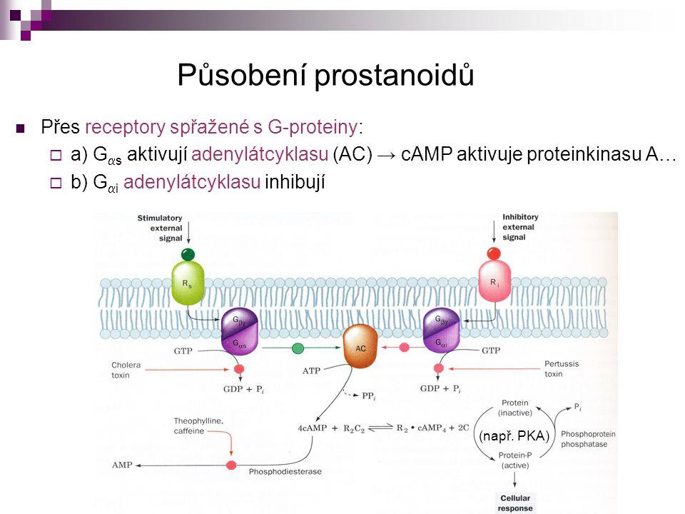 Působení prostanoidů Přes receptory spřažené s G-proteiny:  a) G  s aktivují adenylátcyklasu (AC) → cAMP aktivuje proteinkinasu A…  b) G  i adenyl