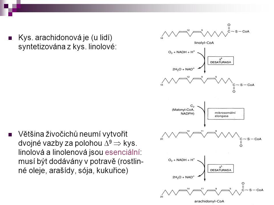 Kys. arachidonová je (u lidí) syntetizována z kys. linolové: Většina živočichů neumí vytvořit dvojné vazby za polohou ∆ 9  kys. linolová a linolenová