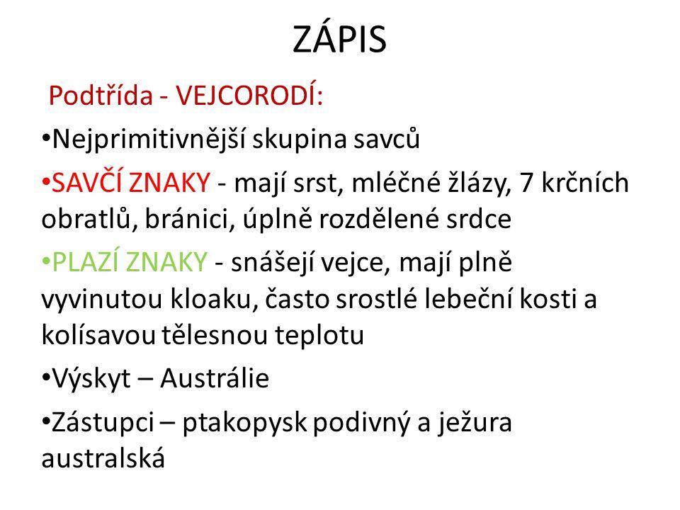 ZÁPIS Podtřída - VEJCORODÍ: Nejprimitivnější skupina savců SAVČÍ ZNAKY - mají srst, mléčné žlázy, 7 krčních obratlů, bránici, úplně rozdělené srdce PL