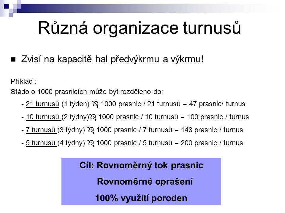 Zvisí na kapacitě hal předvýkrmu a výkrmu! Příklad : Stádo o 1000 prasnicích může být rozděleno do: - 21 turnusů (1 týden)  1000 prasnic / 21 turnusů