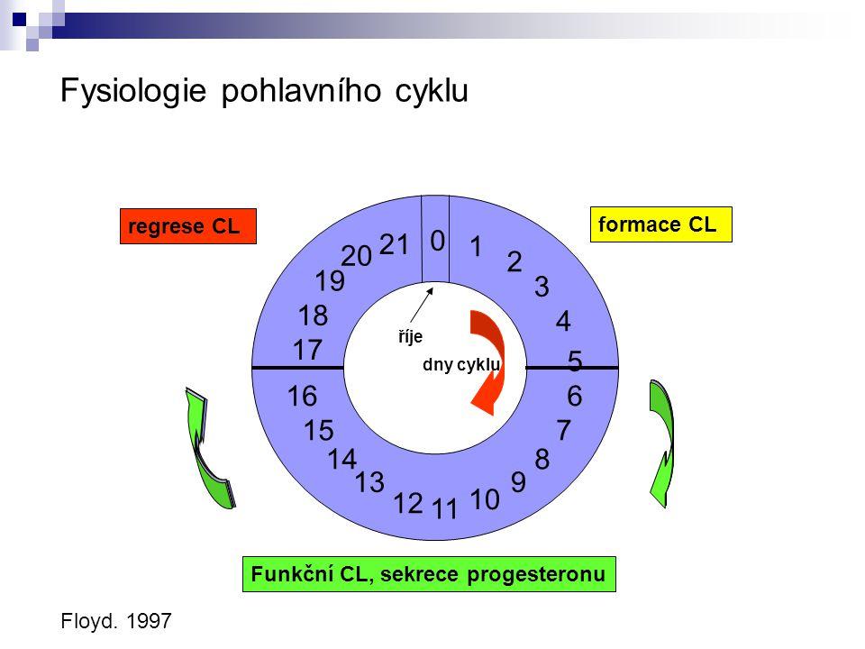 Fysiologie pohlavního cyklu Floyd. 1997 0 1 2 3 4 5 11 16 8 10 7 6 9 12 13 14 15 17 18 19 20 21 dny cyklu říje regrese CL formace CL Funkční CL, sekre