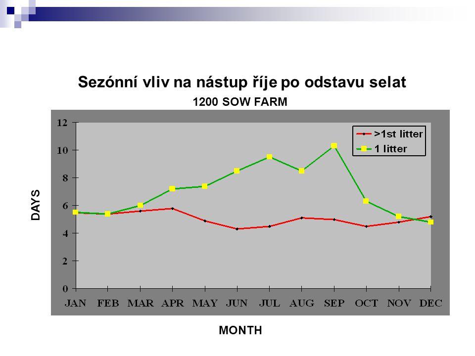 Sezónní vliv na nástup říje po odstavu selat 1200 SOW FARM MONTH DAYS