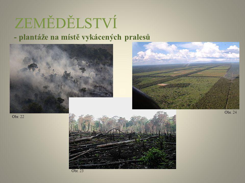 ZEMĚDĚLSTVÍ - plantáže na místě vykácených pralesů Obr. 22 Obr. 23 Obr. 24