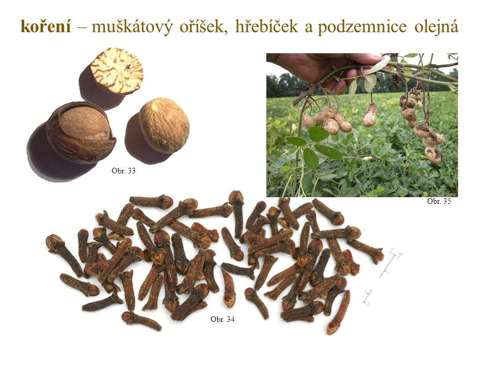 koření – muškátový oříšek, hřebíček a podzemnice olejná Obr. 33 Obr. 34 Obr. 35