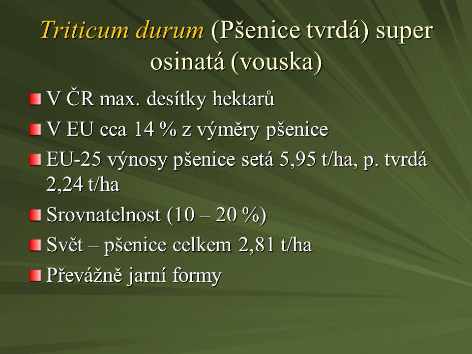 Triticum durum (Pšenice tvrdá) super osinatá (vouska) V ČR max. desítky hektarů V EU cca 14 % z výměry pšenice EU-25 výnosy pšenice setá 5,95 t/ha, p.