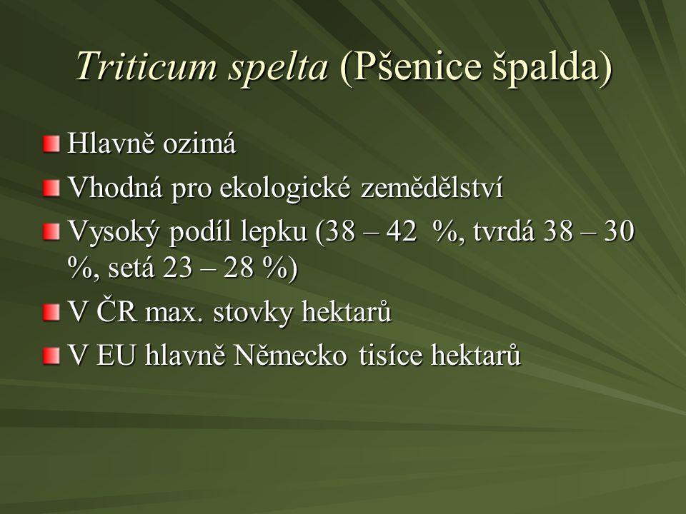 Triticum spelta (Pšenice špalda) Hlavně ozimá Vhodná pro ekologické zemědělství Vysoký podíl lepku (38 – 42 %, tvrdá 38 – 30 %, setá 23 – 28 %) V ČR m