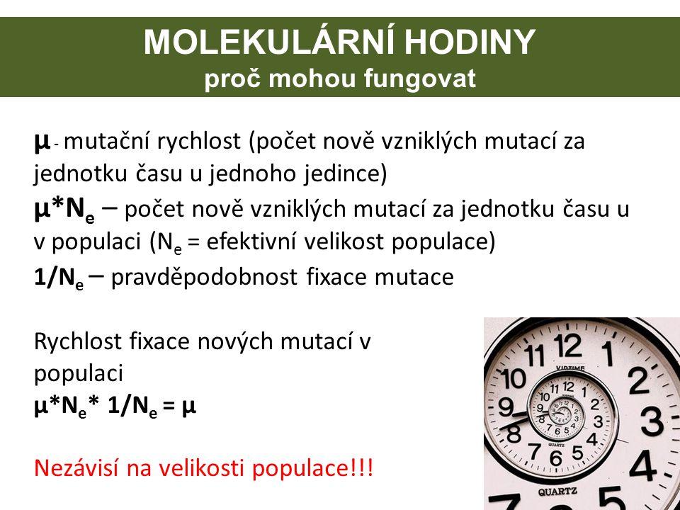 MOLEKULÁRNÍ HODINY proč mohou fungovat µ - mutační rychlost (počet nově vzniklých mutací za jednotku času u jednoho jedince) µ*N e – počet nově vznikl