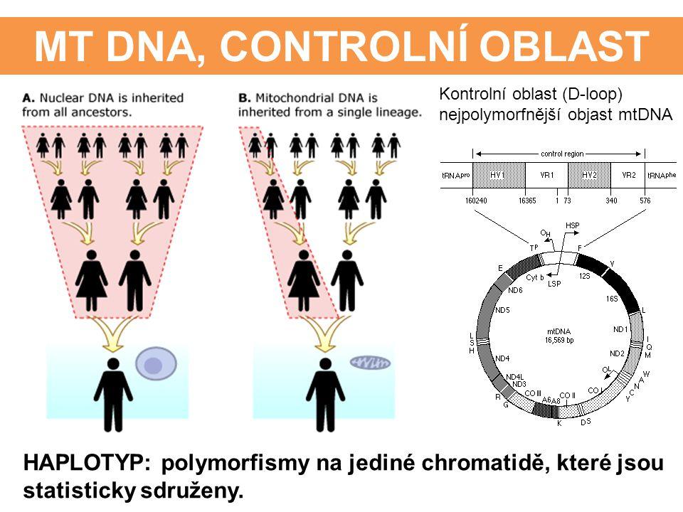 MT DNA, CONTROLNÍ OBLAST HAPLOTYP: polymorfismy na jediné chromatidě, které jsou statisticky sdruženy. Kontrolní oblast (D-loop) nejpolymorfnější obja
