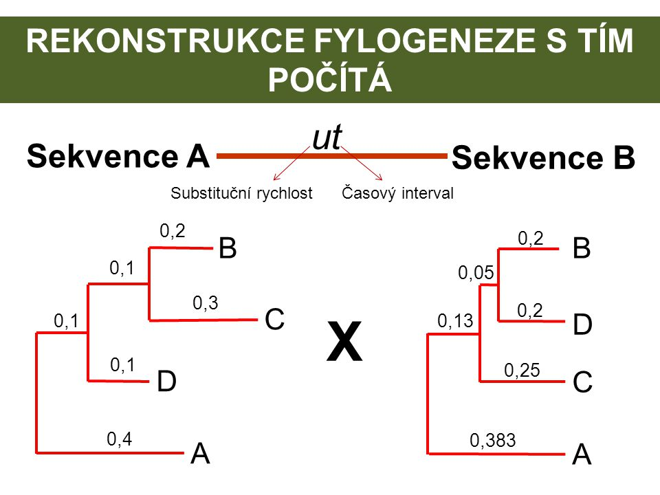 REKONSTRUKCE FYLOGENEZE S TÍM POČÍTÁ C B D A 0,2 0,3 0,1 0,4 0,1 D B C A 0,2 0,05 0,383 0,13 0,2 0,25 X Sekvence A Sekvence B ut Substituční rychlostČ
