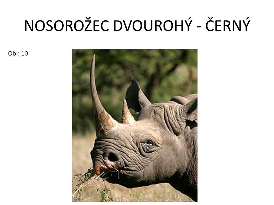 NOSOROŽEC DVOUROHÝ - ČERNÝ Obr. 10