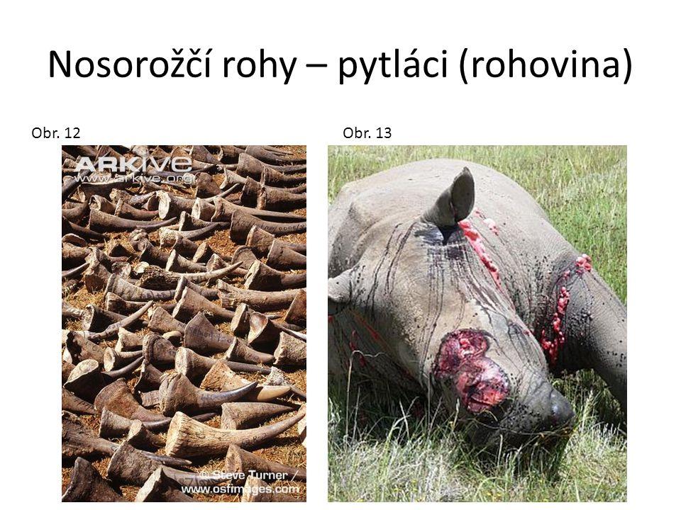 Nosorožčí rohy – pytláci (rohovina) Obr. 12 Obr. 13