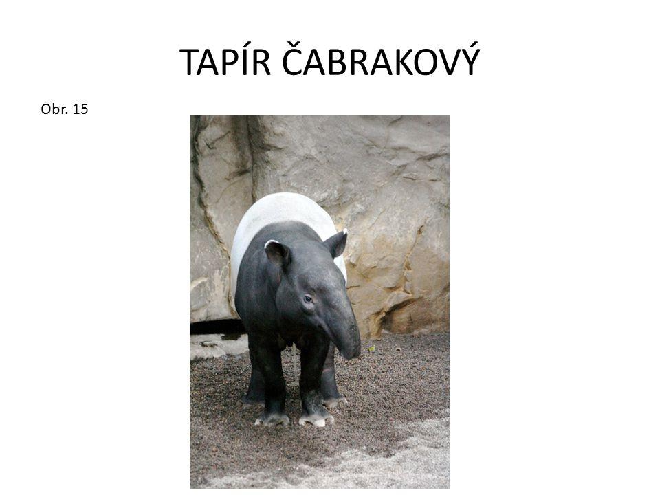 TAPÍR ČABRAKOVÝ Obr. 15