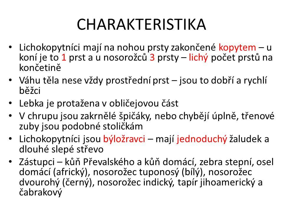 TAPÍR JIHOAMERICKÝ Obr. 14