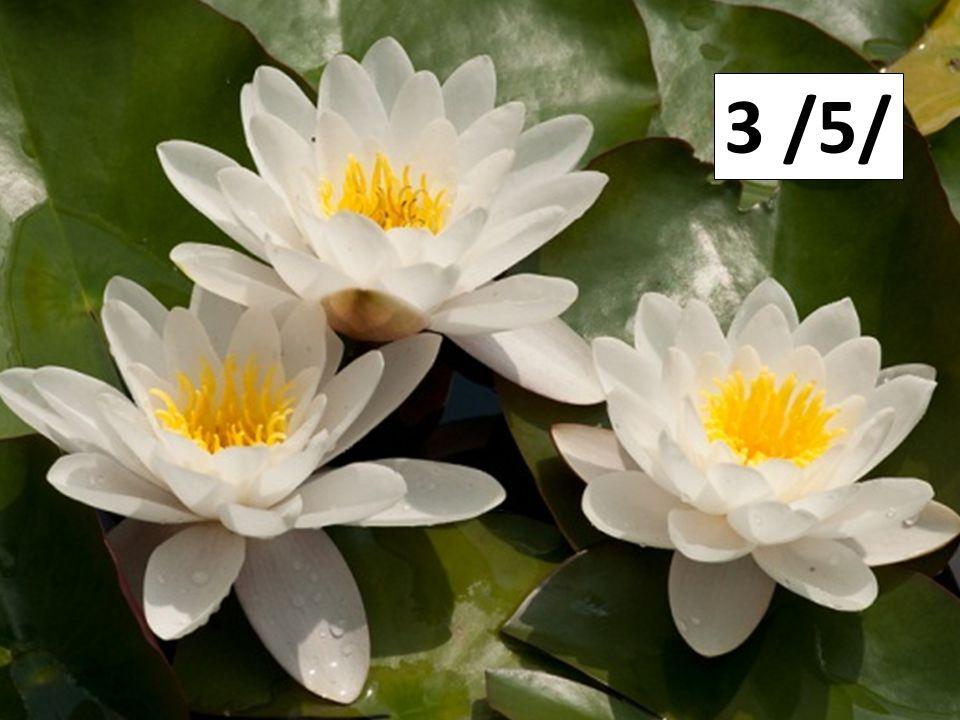 4 /3/