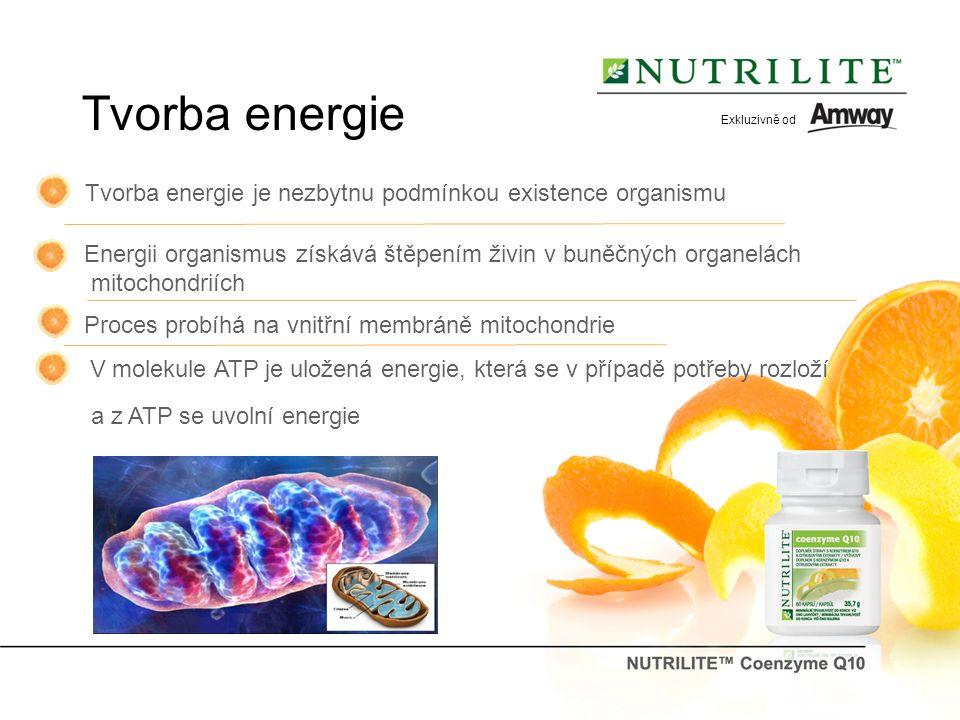Tvorba energie Tvorba energie je nezbytnu podmínkou existence organismu Energii organismus získává štěpením živin v buněčných organelách mitochondriích Proces probíhá na vnitřní membráně mitochondrie V molekule ATP je uložená energie, která se v případě potřeby rozloží a z ATP se uvolní energie Exkluzivně od
