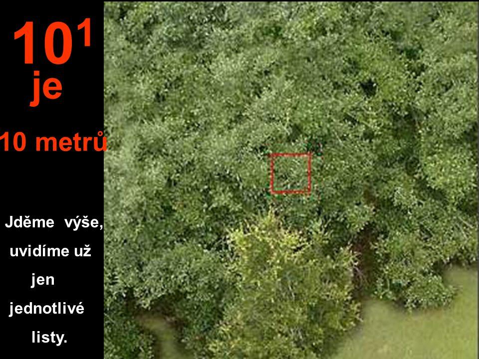 Jděme výše, uvidíme už jen jednotlivé listy. 10 1 je 10 metrů