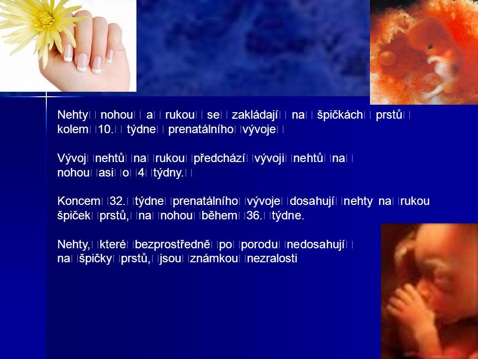 Nehty nohou a rukou se zakládají na špičkách prstů kolem10.